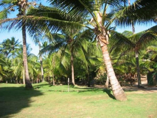 Bed and Breakfast im Palmengarten in Imbassai, Bahia