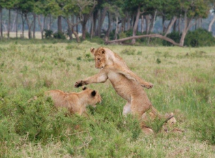 Camp & Safaris am Nordrand der Maasai Mara