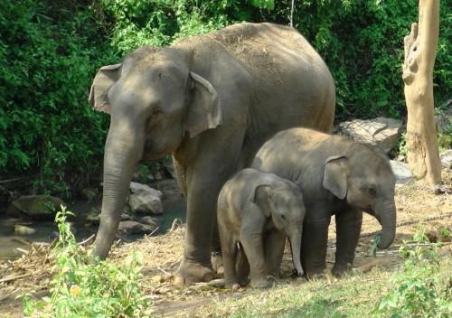 elefanten trekking in thailand deutschsprachig travel. Black Bedroom Furniture Sets. Home Design Ideas